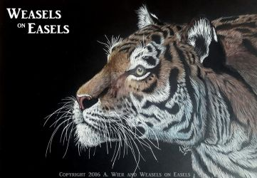 Enlightened ~ Colored Pencil Tiger by WeaselsOnEasels