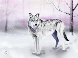Lone Wolf by pessimischick