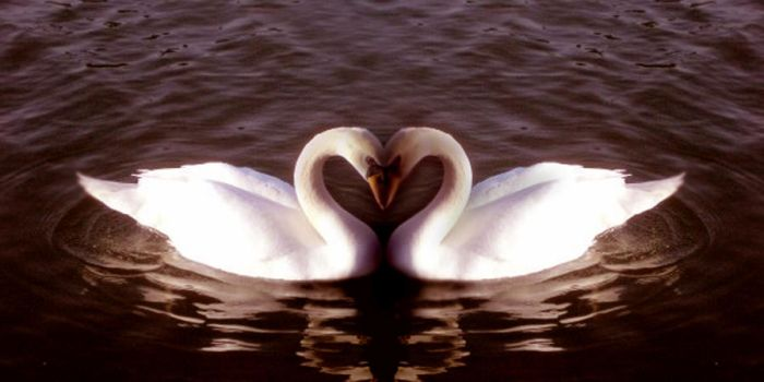 Swan mirror - love by hyperwittlebunny