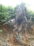 tree stump stock by Asylum-Stock