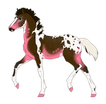 N3123 Padro Foal Design for HorseAdict by casinuba