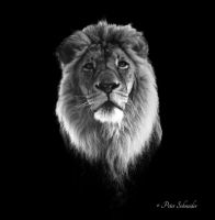 King. by Phototubby