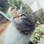 Meow by IloveWKever