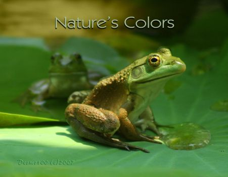 2008 Calendar: Natures Colors by desmo100