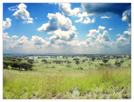 African Savana by TwistedScorpion