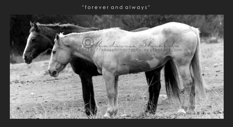 'Forever and Always' by SnowPhotography