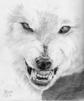 Timber Wolf study by Marbletoast
