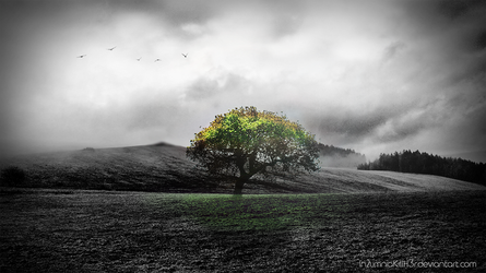 Tree Of Life by In2umniaKillH3r