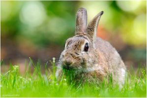 Bunny And Bokeh. by andy-j-s