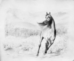 Arabian Stallion 2 - completed by akuinnen24