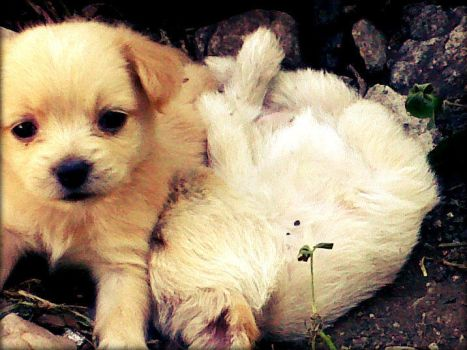 Two Puppies, One sleeping, One just woke up by cjoyzv