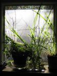 Window Jungle by axcho