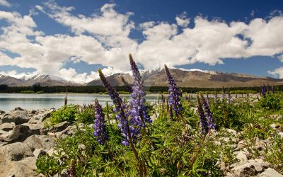 Spring in New Zealand by BallaLeica