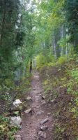 Mountain Trail, Stansbury Mountains, Utah by PamplemousseCeil
