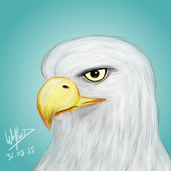 Eagle by BlackWolflord666
