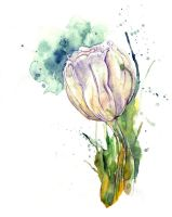 White Tulip II by amwah