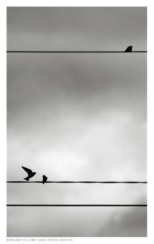 Monologue of a Lonely Avian by blindfive