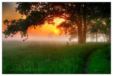 the selected sun by werol