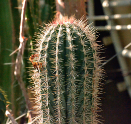Prickly by Cheryona