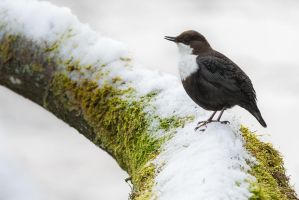 Singing in the Snow by NicoFroehberg