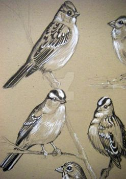 Sparrows Details 2 by HouseofChabrier