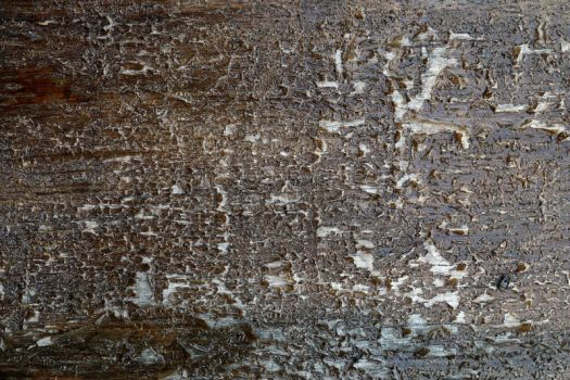 Texture 226 by Malleni-Stock