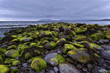 Green Stones by CitizenFresh