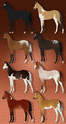 Foal Designs 50 Points Open {5/8} by AltairCallisto