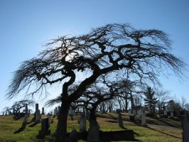 Christmas day in the graveyard by PaulMcKinnon