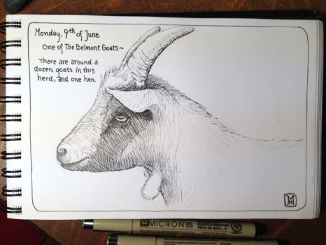 Belmont Goat, a pen and ink drawing. by MarkRHansen