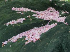 Petals on rock by Thastygliax