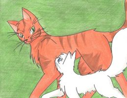 FireHeart and his apprentice by annathewerewolf