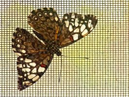 Butterfly on screen by MichelLalonde