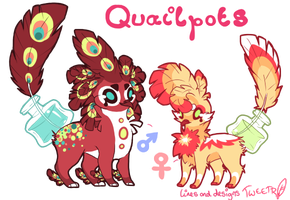 Quailpots Adoptable Auction #1 CLOSED by Tweettii