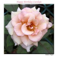 Happy Birthday Carolajn by David-A-Wagner
