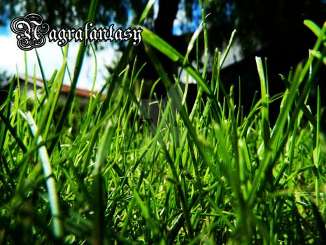 Lawn by Nagrafantasy