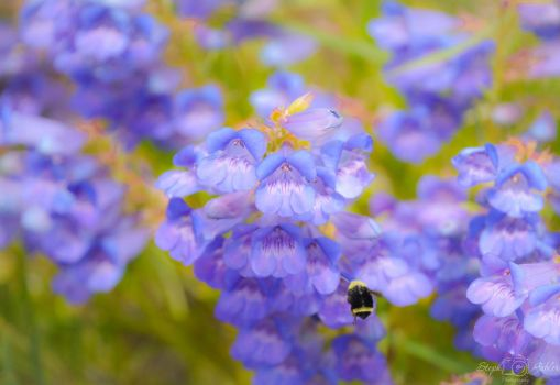Buzzing Around by StephGabler