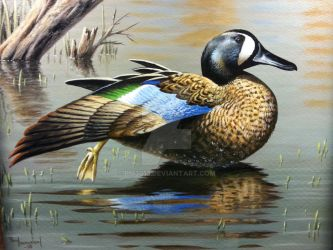 Waters Edge Stretch, Blue winged Teal by pm3013