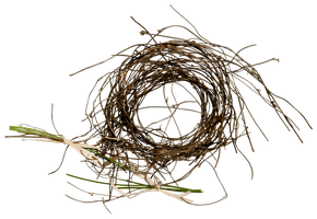 Nest_png by soEena