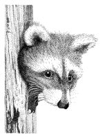 Raccoon Stippling by Goldencloud
