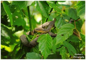 A Small Water Snake In A Bush by TheMan268