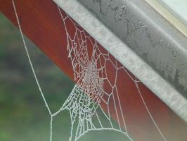 Frozen Spiderweb by MartiniPols