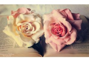 White and pink roses by FrancescaDelfino
