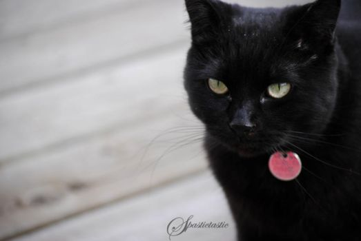 Black Cat by AllysaH-Photography