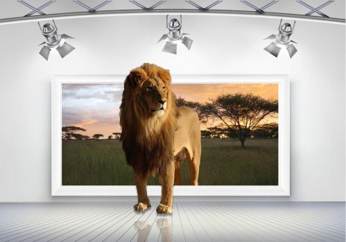 Lion Out of bounds 3 Frame Room PSD by wsaconato