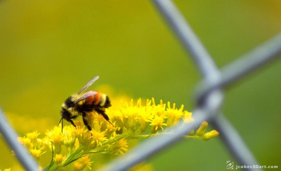 Close Up Bee Fence by JCobes