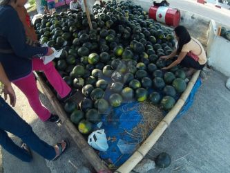 Water Melons Up for Grabs! by bestofworldtravel