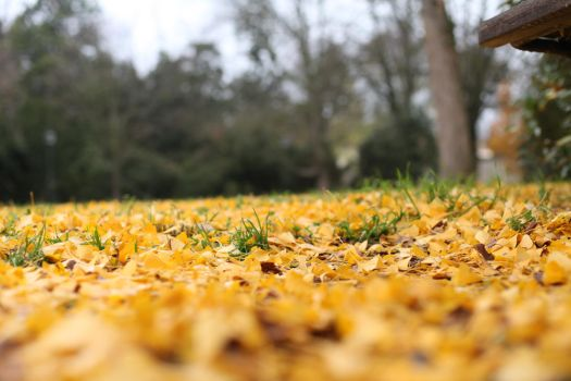 Autumn Leafs by NicolaZanarini