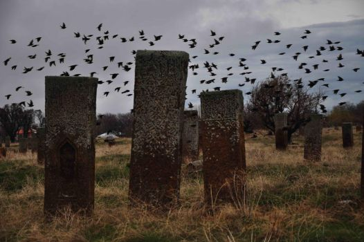 Cemetery and birds by ridvanakin