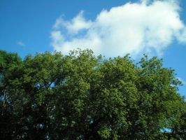Trees and Sky by steward